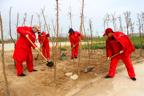 胜利油田孤岛环卫绿化大队劳务输出员工为甲方提供优质服务
